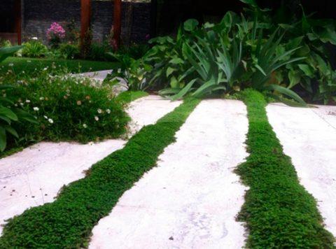 Paisajismo y jardines – muva